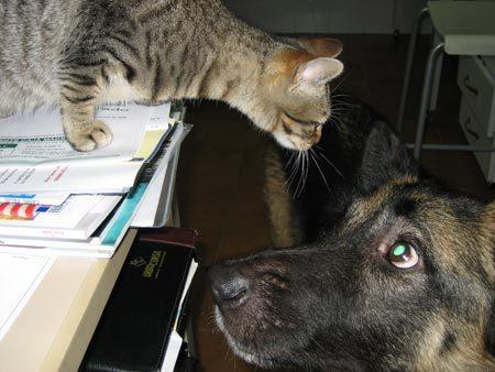veterinario en San Blas